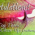 Extreme Close-Ups Top Ten Banner Entry by Susana Weber