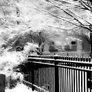 Dreamy Winter ©  by Dawn Becker