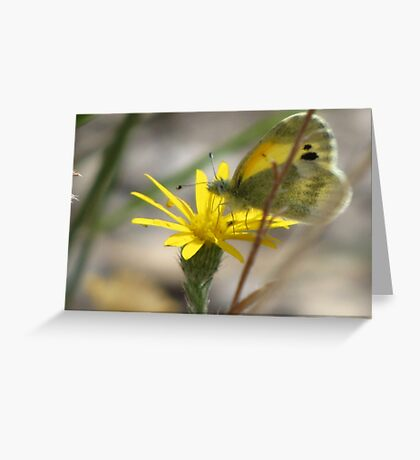 Dainty Sulfer Greeting Card