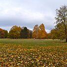 Tiergarten im Herbst by metronomad