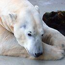 Polar Bear by Lidiya