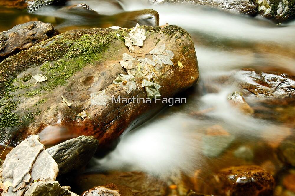 Leaf & Rock at Torc by Martina Fagan