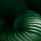 """""""A Touch of Tropical Green"""" by Sophie Lapsley"""