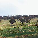 Green, Green Hills by NinaJoan