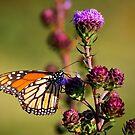Flutter Bye,,,I Need More Flutter Byes by Adam Kuehl