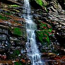The Falls by Debra Fedchin