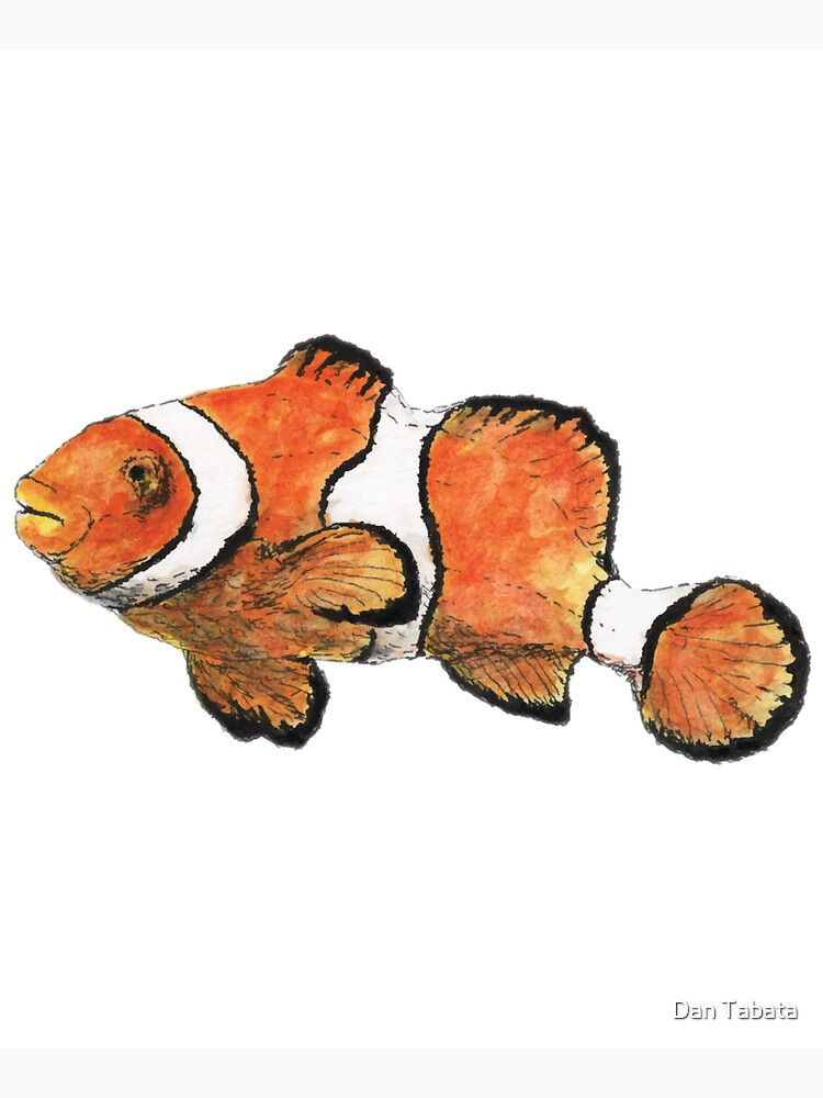 Clownfish by dmtab
