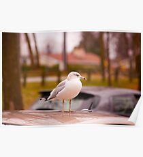Seagull on the roof Poster