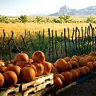 Pumpkins in the Morning - Agua Linda Farm, AZ by Lori Botelho