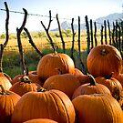 Pumpkins on the Farm - Agua Linda Farm, AZ by Lori Botelho