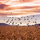 October black birds and cornfields by Linda Storm