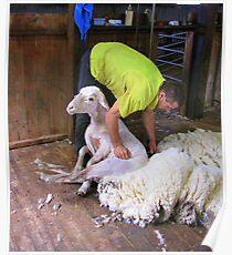 Shearer Poster