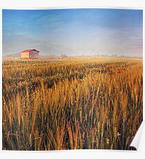 sunrise over misty wheat field Poster