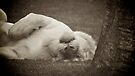 Let Sleeping Lions.... by Vince Russell