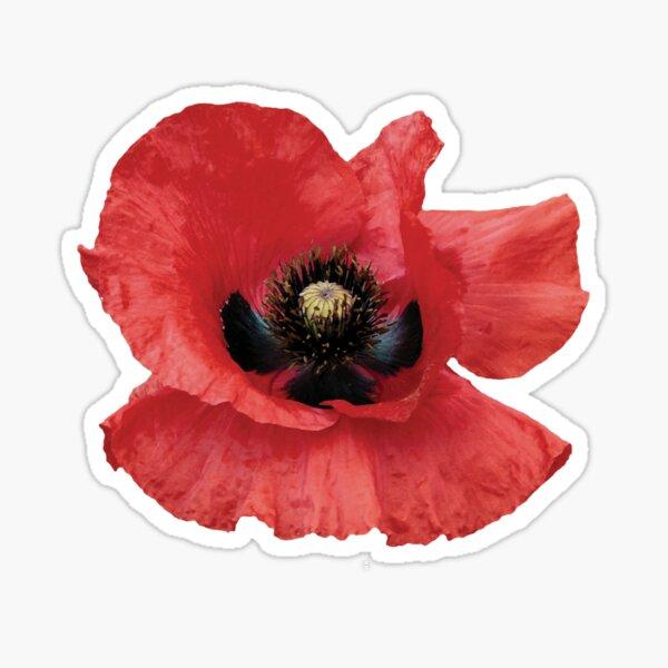 Isolated Open Red Poppy Flower Sticker