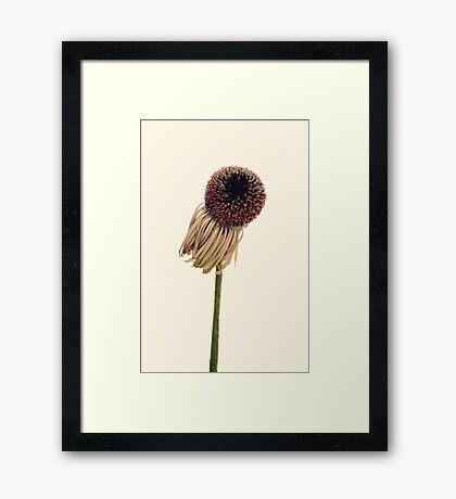 Zoe's Framed Print