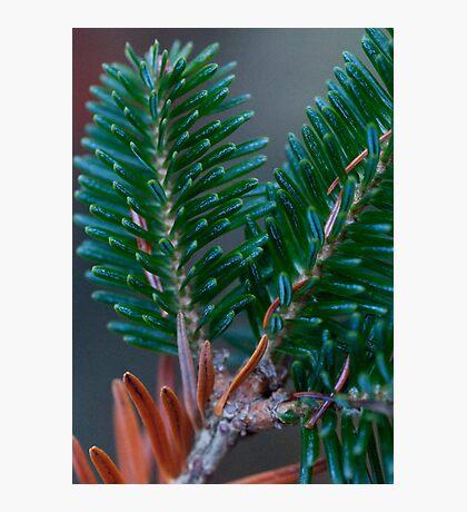 Christmas Detail Photographic Print