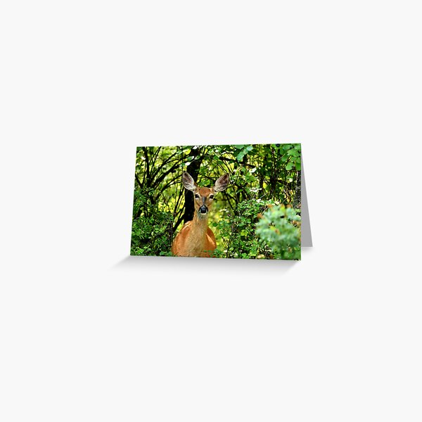 Deeritudes - Just Checking You Out - Whitetail Deer Doe - Montana Greeting Card