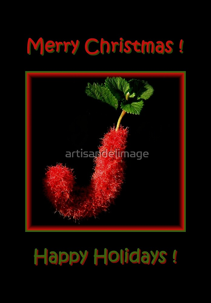 Merry Christmas ! by artisandelimage