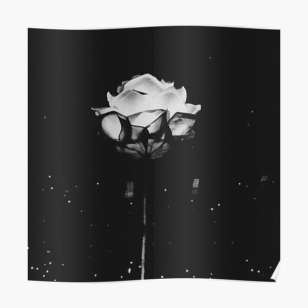 Shawn Mendes Rose Poster