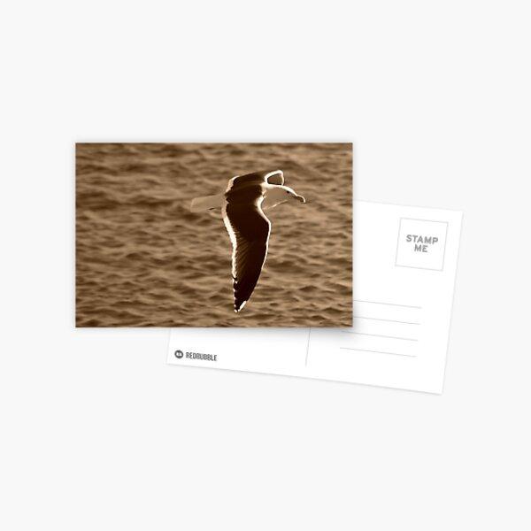 Gull I Postcard