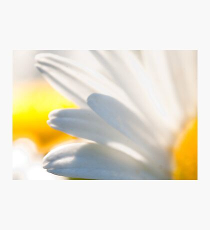 My Daisies Photographic Print