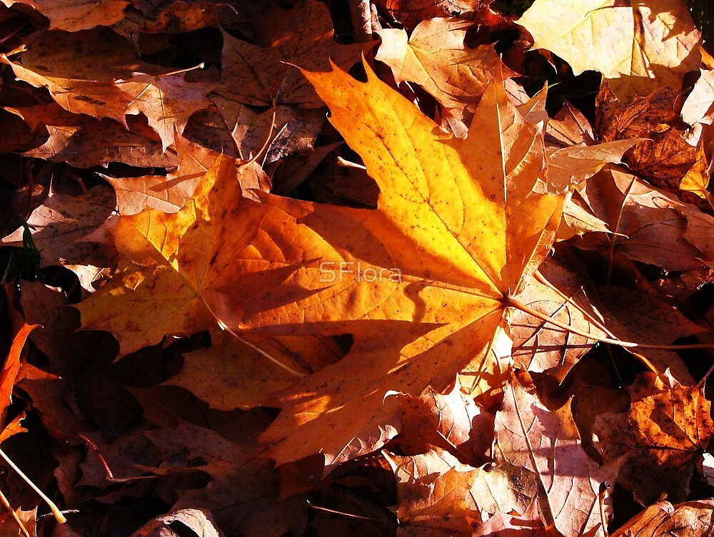 Autumn leaves 2 by Sukhwinder Flora