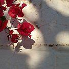 Boganvilla Wall by Chanzz