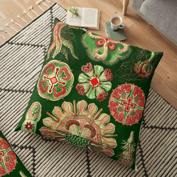 Ernst Haeckel Pillows Cushions Redbubble