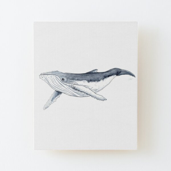Humpback whale baby Wood Mounted Print