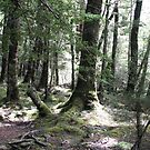 Sylvan Forest - New Zealand by Louise Linossi Telfer