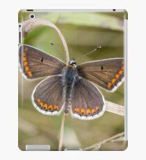 Brown Argus iPad Case/Skin