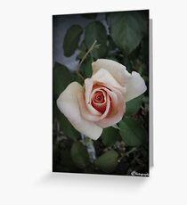 Peach Rosebud Greeting Card