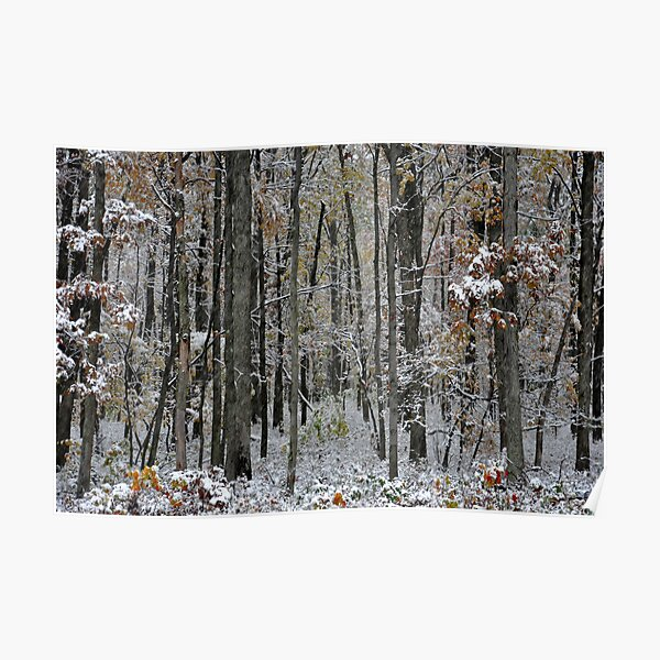 A Stand of Trees in the First Snow Poster