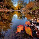 Feeling Fall by Bob Larson
