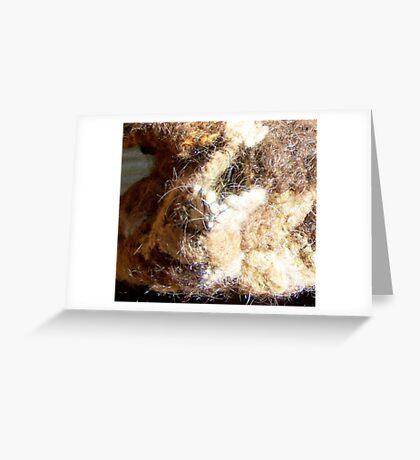 Saint Bernard - detail - human hair Greeting Card