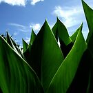 Canna Leaves by David Mellor