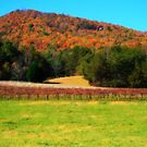 Country Vineyard by Chelei