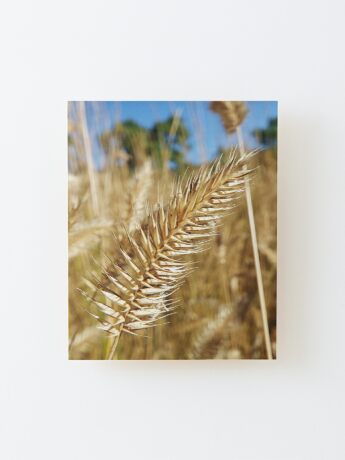 Gone to Seed Wood Mounted Print