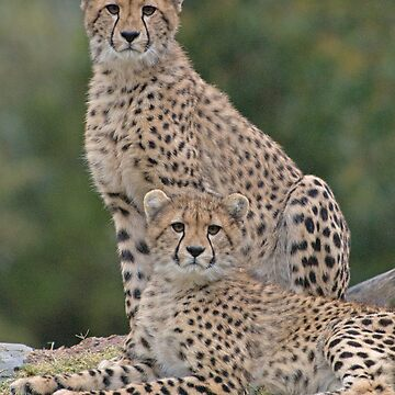 Brothers by bfra