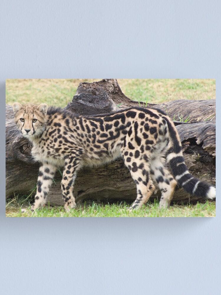 Alternate view of Female - King Cheetah Canvas Print