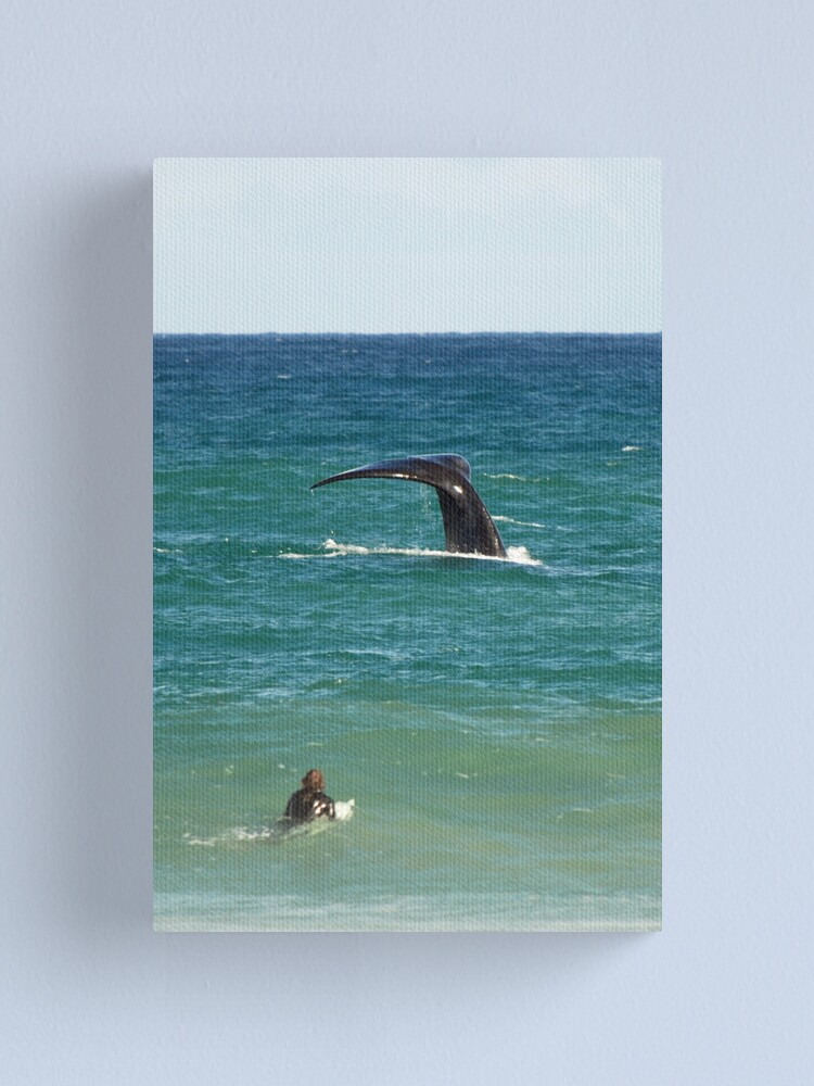 Alternate view of Southern Right Whale Canvas Print