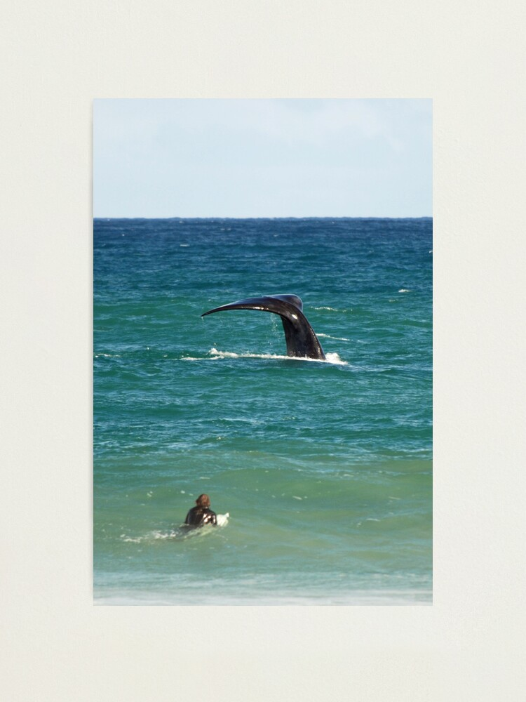 Alternate view of Southern Right Whale Photographic Print