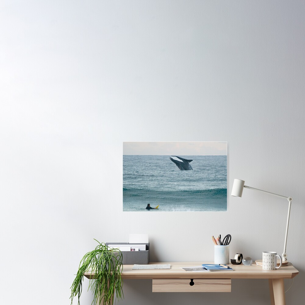 Southern Right Whale Poster