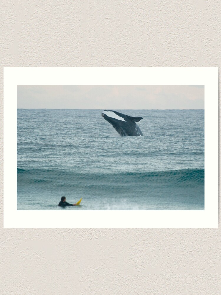Alternate view of Southern Right Whale Art Print