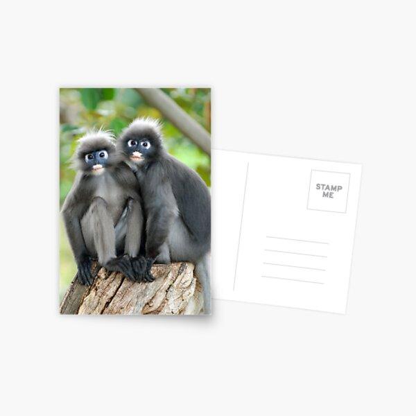 Dusky Leaf Monkeys Postcard