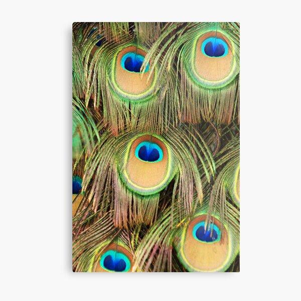 Peacock tail Metal Print