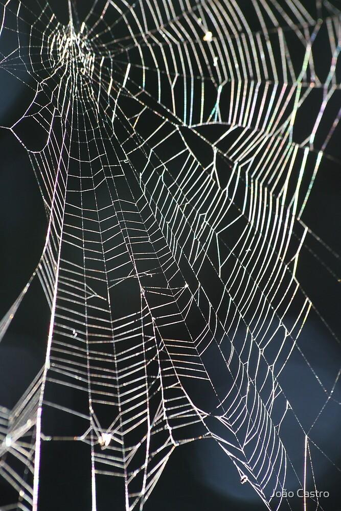 The Web 2823 by João Castro