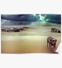 Tin City Dog, New South Wales, Australia Poster