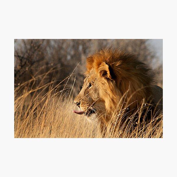 Contemplating Dinner, Etosha National Park Photographic Print